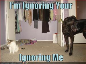 Cat-CatIgnoringDogImIgnoringYouIgno_3821